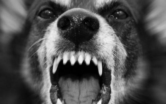 abogados coruña perros peligrosos
